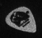 Ca. 2000, photo of Pete's Pete's Guitar pick.